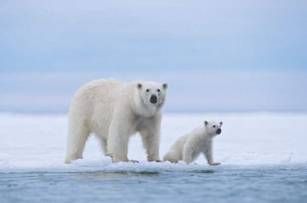 25 мимими-фактов о животных. Улыбнитесь!