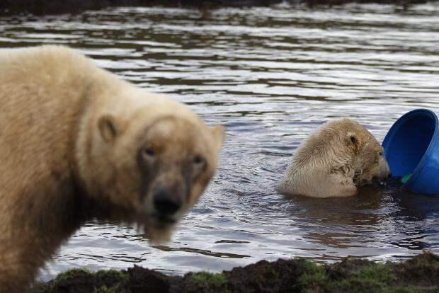 Волки и медведи в Шотландии