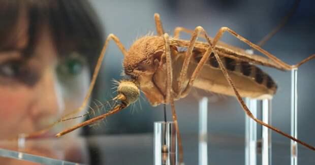 ВВеликобритании создали миллионную армию комаров-мутантов иэто вовсе неновое оружие