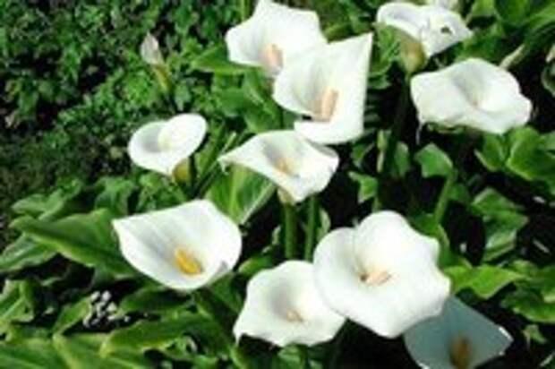 Топ 10 растений для садового пруда