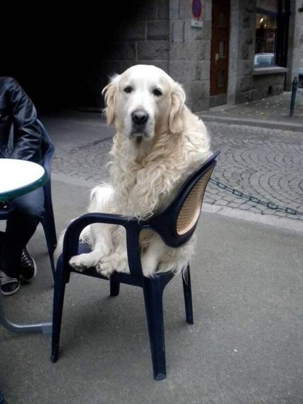 «Отстаньте, я в печали!» Коты и собаки, которым надо дать Оскар за самую драматическую роль