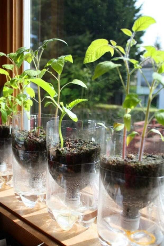 Мастер-класс: Делаем самополивные горшки для рассады из пластиковых бутылок
