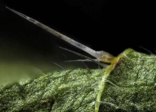 Миллионы маленьких жал — почему крапива жжется и оставляет волдыри