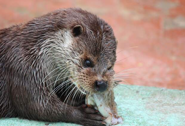 Пенсионеры смогут бесплатно посетить нижегородский зоопарк «Лимпопо»