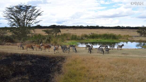 Страны Африки ищут средства для управления заповедниками