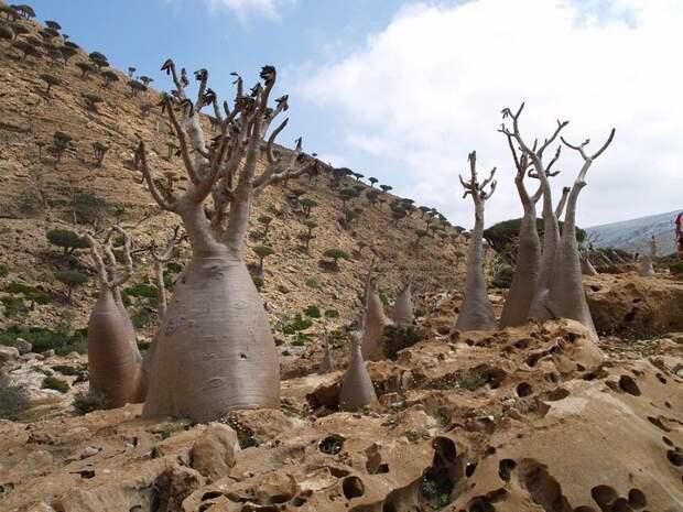 Socotra16 Удивительный остров Сокотра