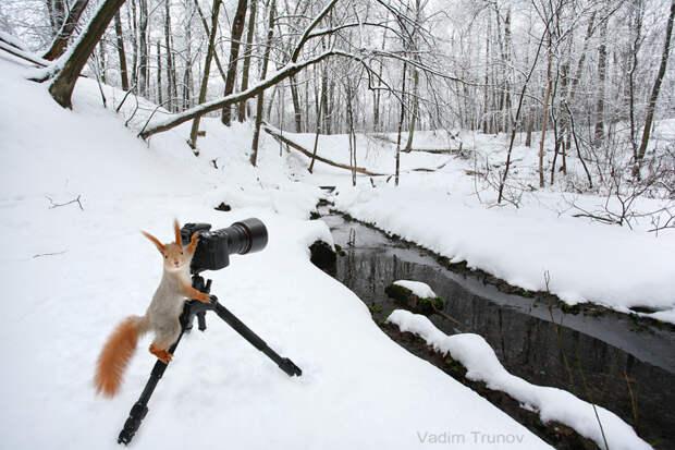 Пейзажист Вадим Трунов, белки, животные, фотограф