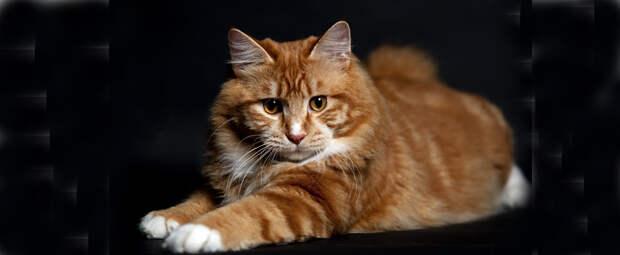 Кот напугал хозяина новой квартиры