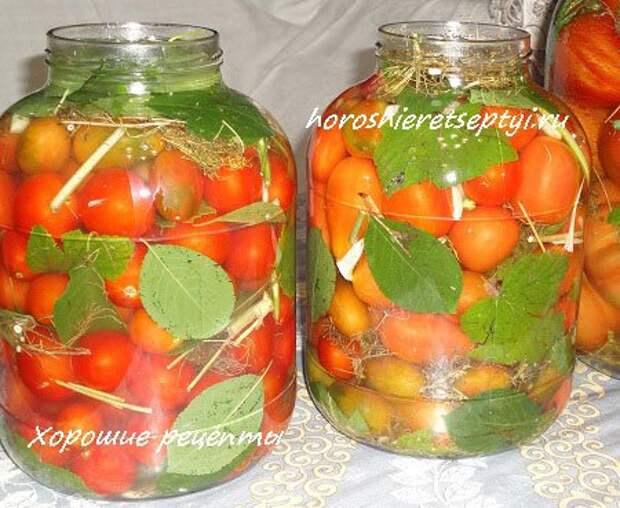 Соленые помидоры на зиму