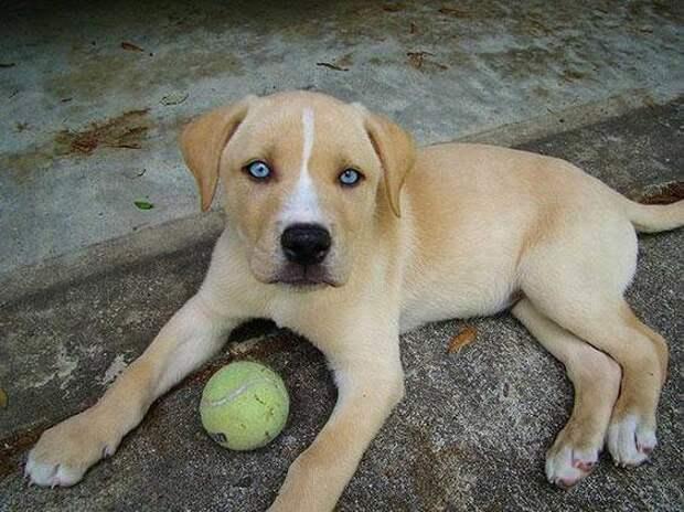 Самые красивые гибридные породы собак