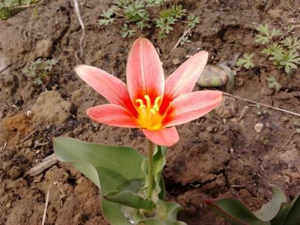 Цветы садовые - Страница 84 - форум-виноград