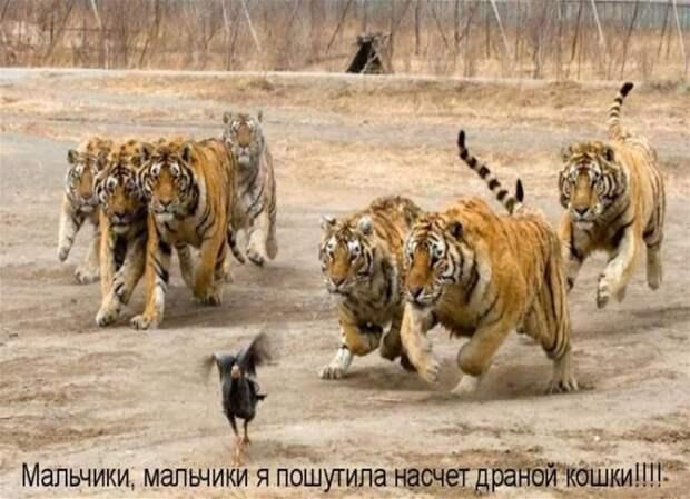 Несерьезные фотографии серьезных зверей