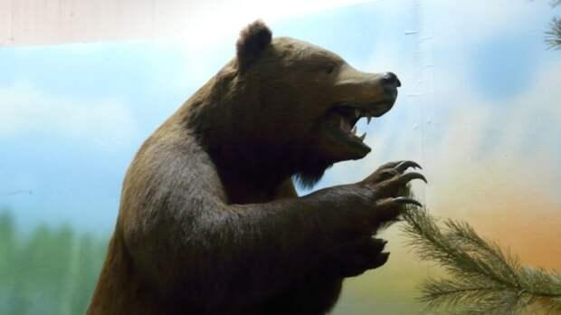 Музей природы в Череповце готовится к закрытию