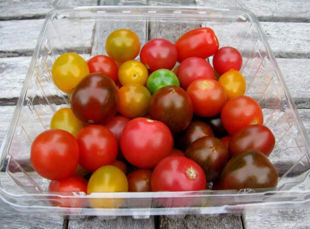 Разнообразие плодов томатов черри