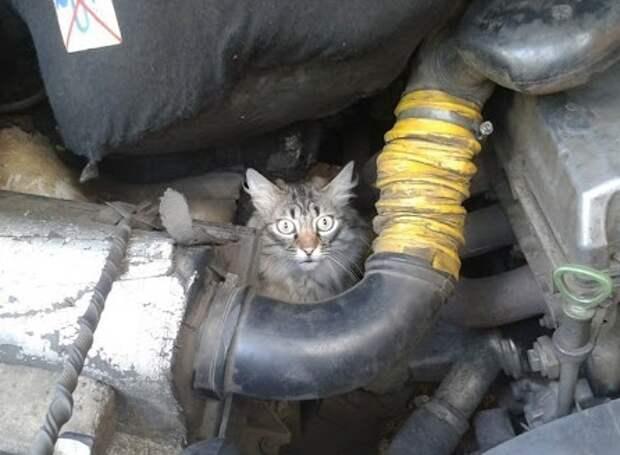 Уютный и опасный капот: автовладельцев из Лианозова попросили внимательно прислушиваться к мяуканью