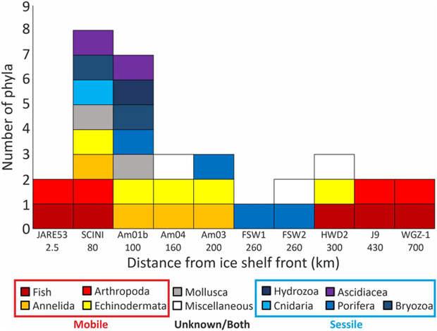 Совокупные данные всех имеющихся наблюдений подледной жизни на антарктическом шельфе