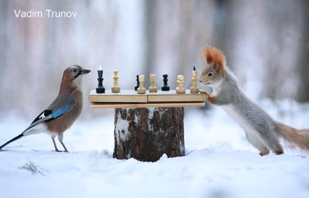 Шах и мат Вадим Трунов, белки, животные, фотограф