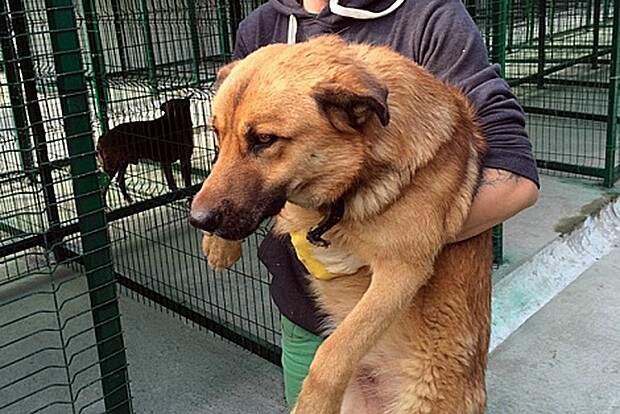 Бездомные собаки Олега Дерипаски бизнесмен, животные, политик, факты