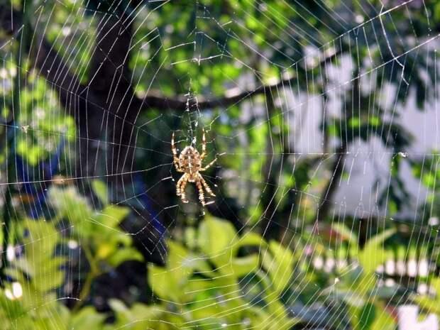 Если укусил паук - первая помощь и что нельзя делать