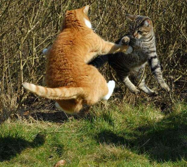 cat_flying_fight_04