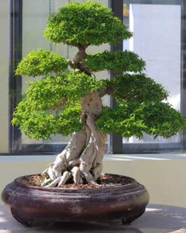 Мои деревья из пряжи «травка»/3576489_bonsai3 (319x400, 22Kb)