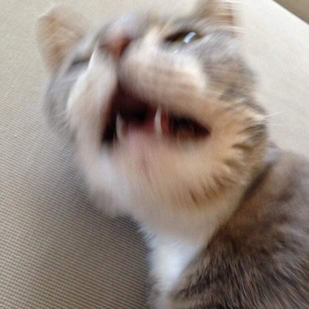 """18. Говоришь """"будь здоров!"""", когда он чихает домашний питомец, животные, кот, прикол, юмор"""