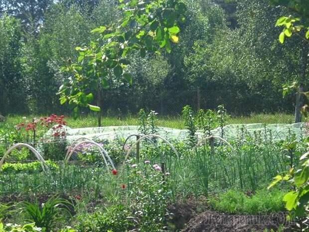 8 самых важных правил для начинающего огородника