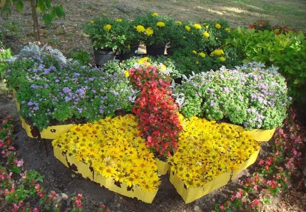 Низкорослыми сортами цветка можно заполнить клумбы
