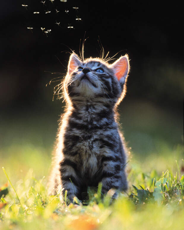 Милая подборка кошек, которым не чужды выражения чувств