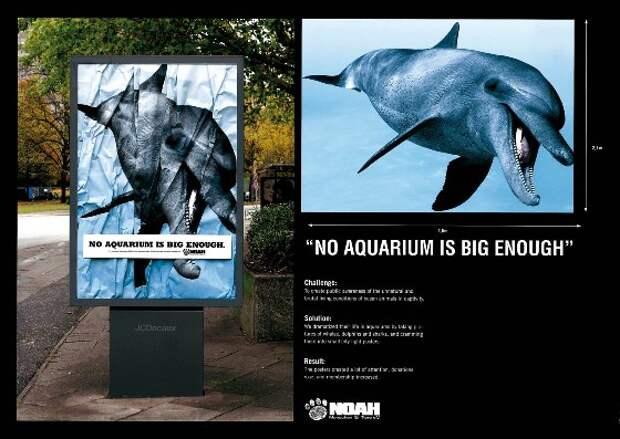 Не бывает больших аквариумов