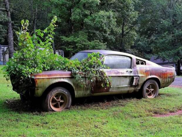 Заброшенный Ford Mystang