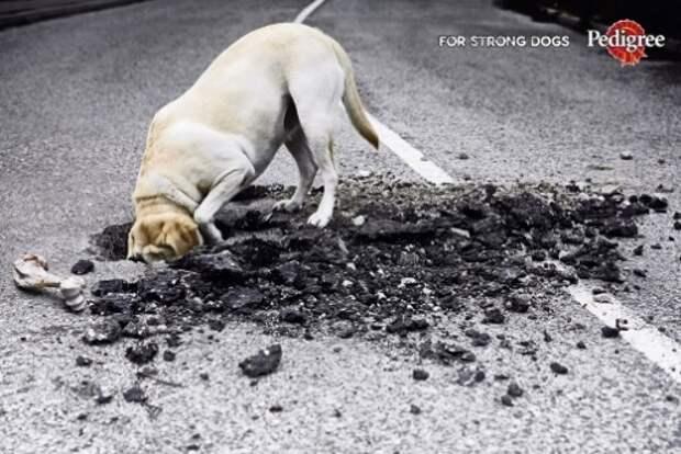 Рецепт превращения собаки в экскаватор