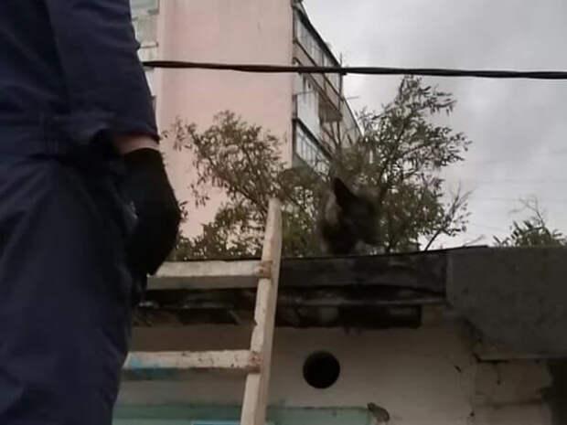 На Кубани спасатели эвакуировали оголодавшую собаку с крыши