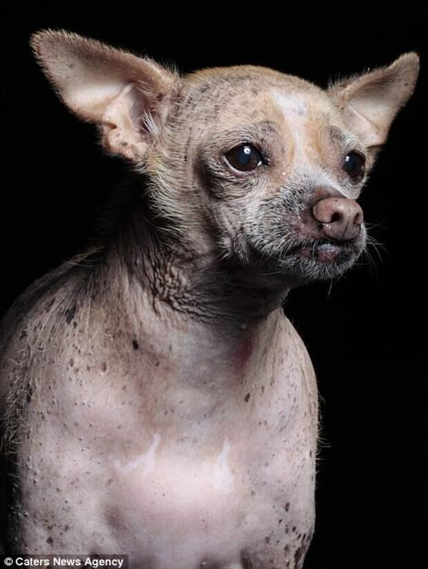 Уродливые собаки