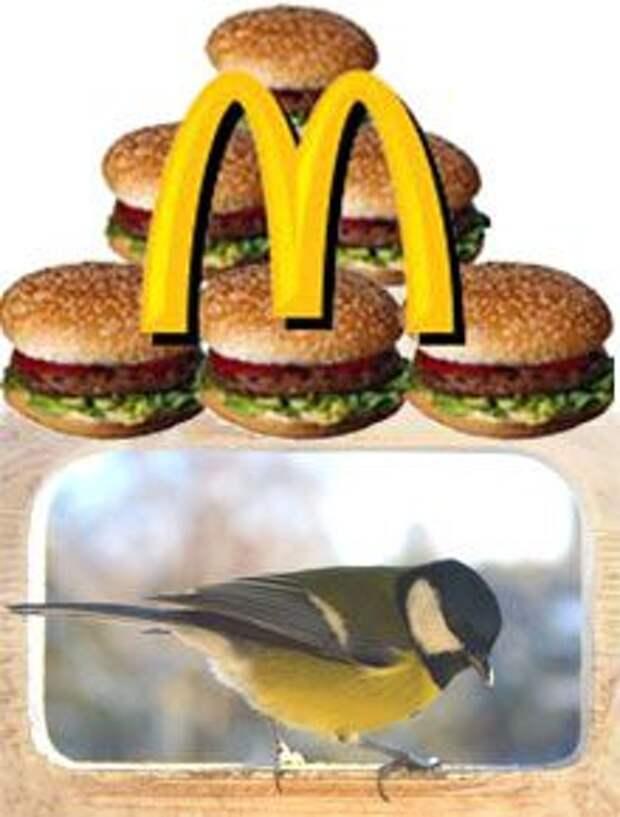 Кормушки для птиц – символ заботы о потребителе