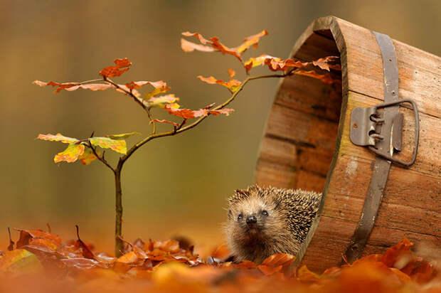 животные осенью картинки
