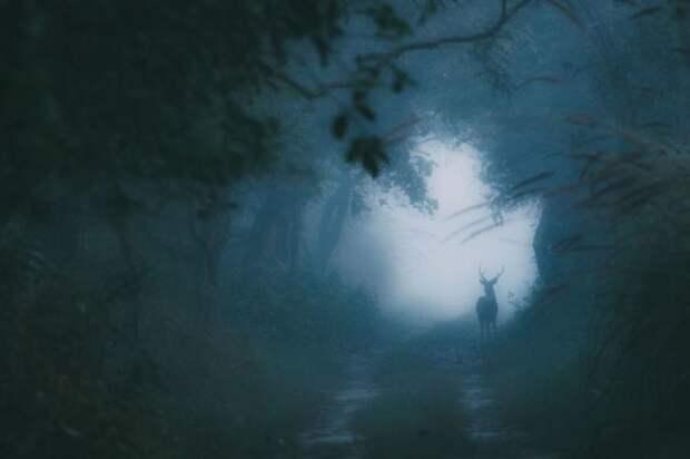 Зимнее утро в лесу. Автор фотографии: (Swaroop Singha Roy).