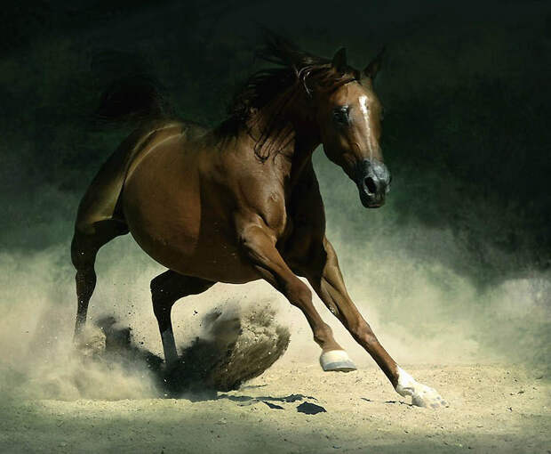 23. Нескольких арабских лошадей польского происхождения конфисковали у нацистов и импортировали в СШ