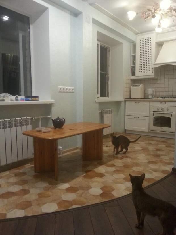 Белая кухня. Коты в кухне.