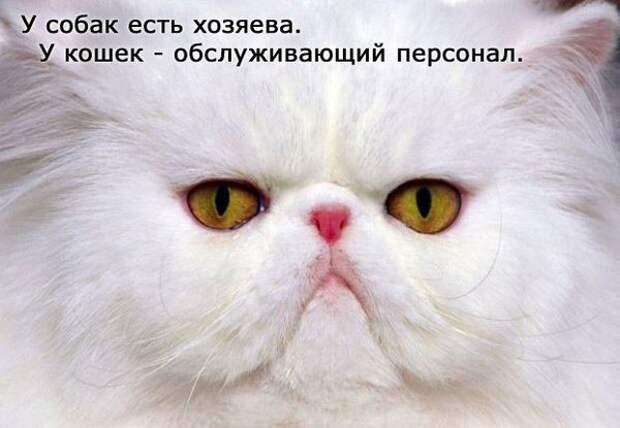 Афоризмы о кошках