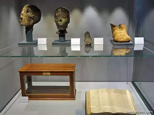 медицинские мумии