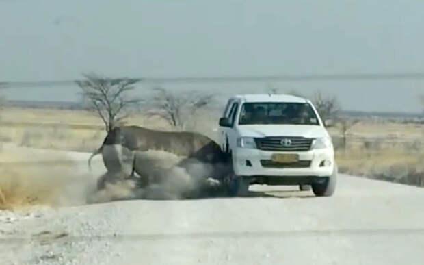 Разъярённый носорог