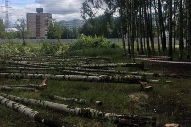 Беглов остановил вырубку Муринского парка по просьбе горожан
