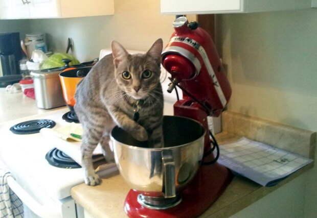 Коты-преступники