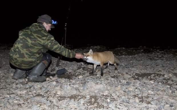 Случай на рыбалке. Неожиданная ночная гостья. 15 Фото