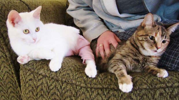 Самый большой приют для кошек и собак