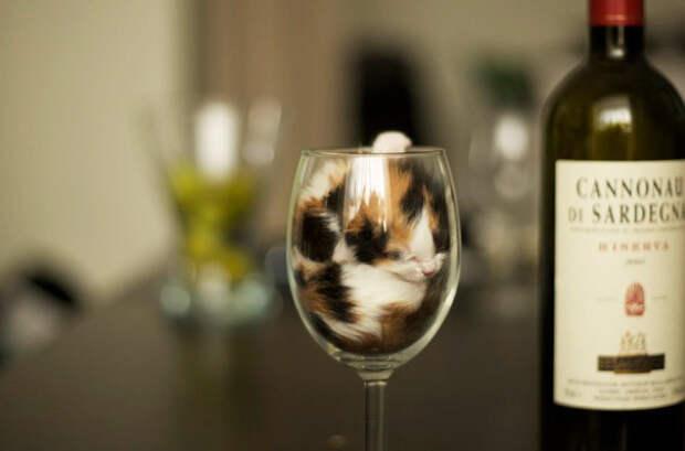 33. Спасибо, больше сегодня никакого вина котенок, сон