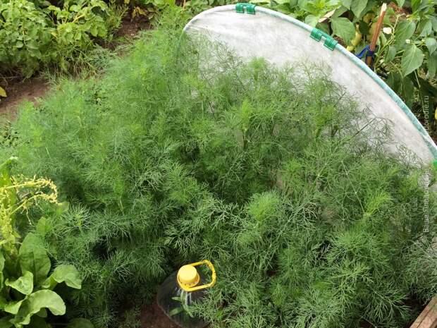 Проба пера в природном земледелии