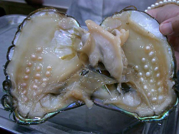 Как отличить морской жемчуг от речного жемчуга