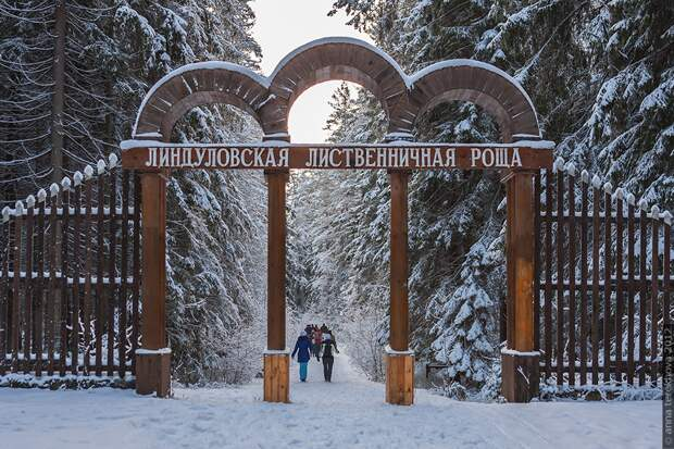 Почему это место стало самым популярным среди тысяч петербуржцев?